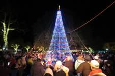 Julefest Tree-Lighting, Parade & Santa Oh My!