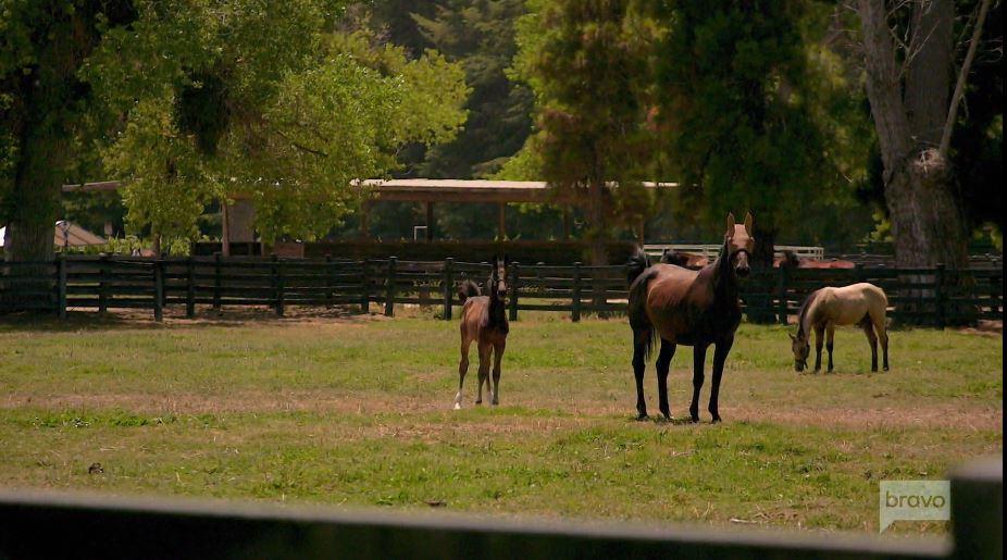 Bella Cavalli Farms