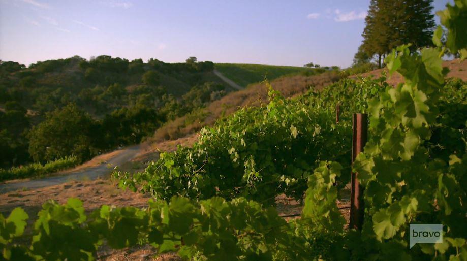 Demetria Estate Winery & Vineyard